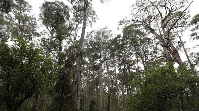 Le gouvernement australien s'est fixé comme objectif de planter un milliard d'arbres d'ici 2050. (Archives)