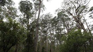 Réchauffement climatique: l'Australie veut planter un milliard d'arbres d'ici 2050