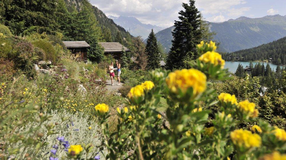 Un grand nombre d'espèces prospèrent avec succès en montagne, nonobstant de plus rigoureuses conditions.