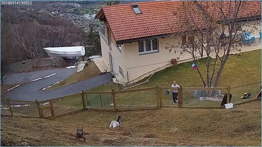 La photo, prise par une caméra de surveillance, montre le loup à quelques mètres du domicile de Patricia Couturier Arlettaz.