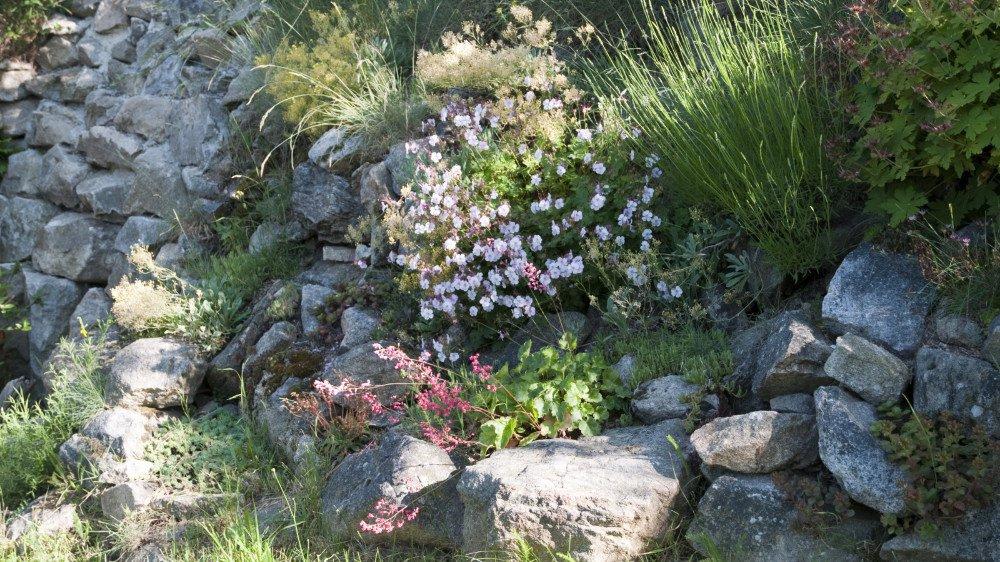 Vous voulez créer un jardin en altitude? Nos conseils...