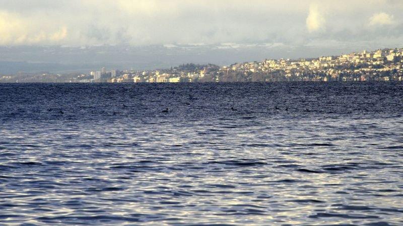 Léman: le lac n'a plus été oxygéné en profondeur depuis 2012