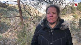 Les pins de Niouc souffrent du réchauffement climatique et des sécheresses à répétition