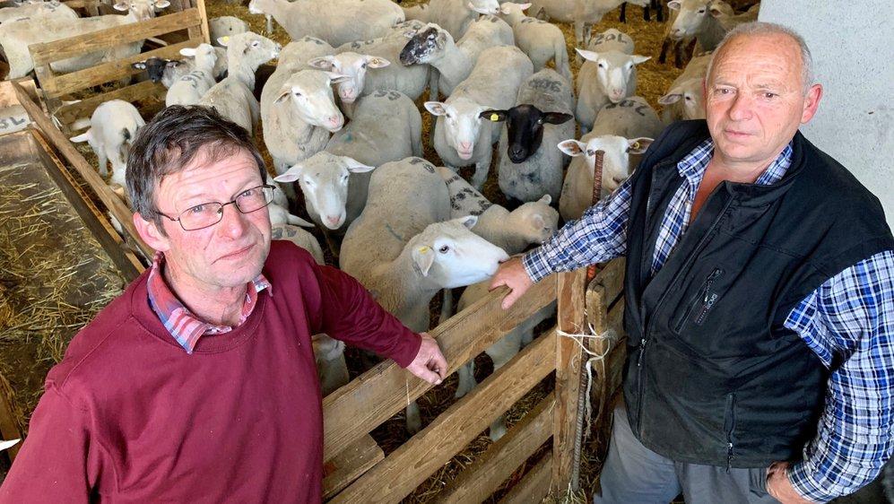 Les moutonniers du Chablais William Grenon (à gauche) et Dominique Vannay craignent les attaques du loup. Pour ce dernier, les moutons vont au casse-pipe.