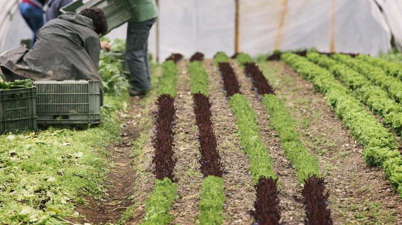 Plus de 90% des sols bio du Plateau suisse contiennent des pesticides