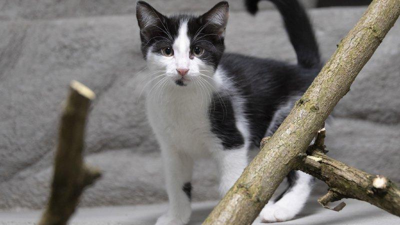 Animaux: pour sa santé et la vôtre, évitez de laisser sortir votre chat