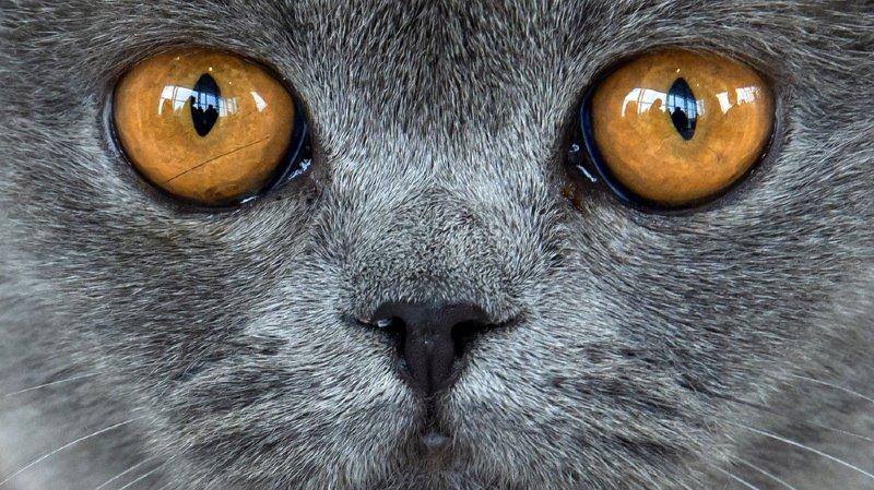 Maltraitance animale: une habitante thurgovienne conservait 21 cadavres de chat dans son congélateur