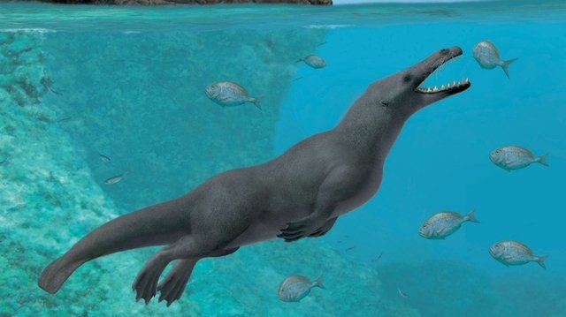 Pérou: le fossile d'une baleine à quatre pattes a été découvert