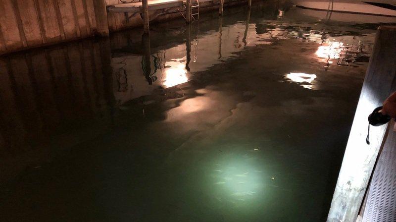 Des centaines de milliers de poissons se sont regroupés dans le port couvert de Sugiez pour une raison encore inconnue.