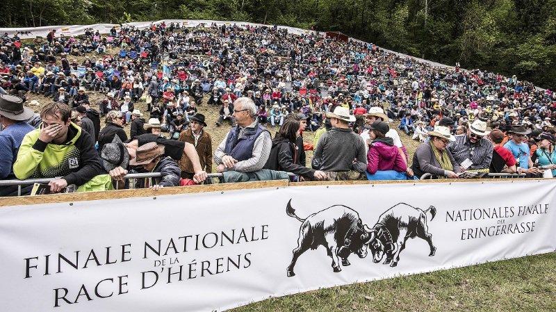 Combat de reines: la région Dents du Midi se mobilise pour sa finale nationale des 4 et 5mai à Sion