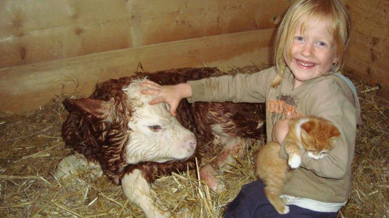 La Journée du lait va permettre aux plus jeunes de découvrir le quotidien d'une étable. En Valais aussi!