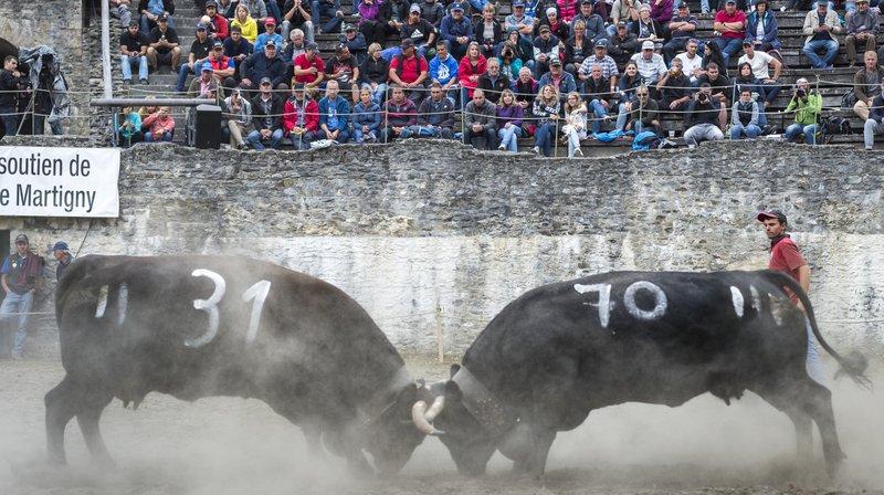 Reines: Nendaz organise le combat de la Foire du Valais