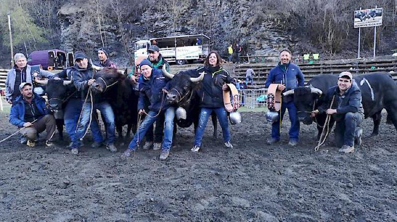 Quatre vaches ont fini premières de la catégorie 1.