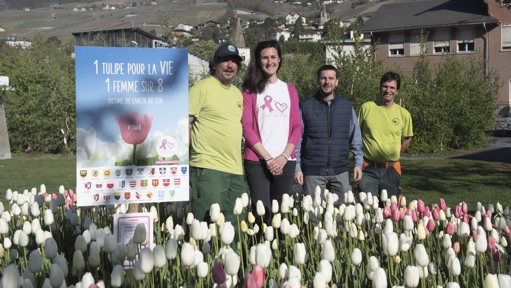 Les employés du Service des parcs et jardins de la Ville de Sierre entourent Pierre Kenzelmann, conseiller communal, et Caroline Thieulin, vice-présidente de l'association L'aiMant Rose, qui vise à promouvoir le dépistage précoce du cancer du sein. Dans ce cadre, 1500 tulipes ont été plantées à proximité de la Crèche de l'Europe.