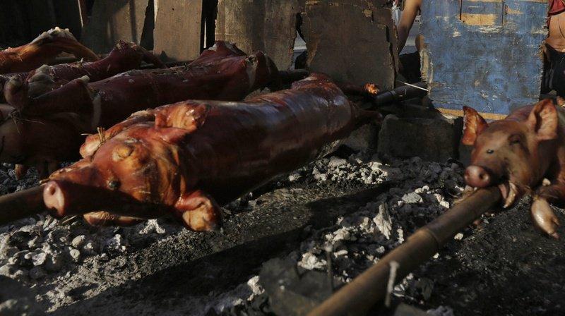 Le cochon à la broche est une tradition des étudiants vétérinaires zurichois.