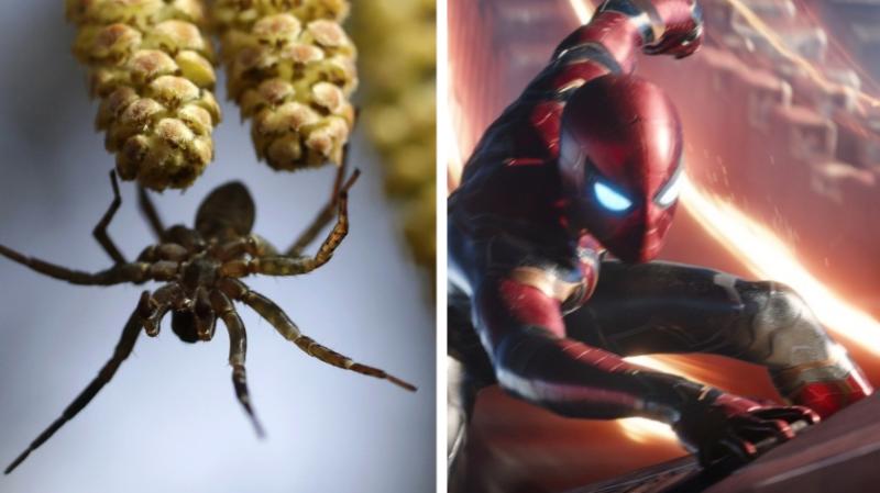 Vous avez peur des araignées? Regarder Spider-Man pourrait vous aider!