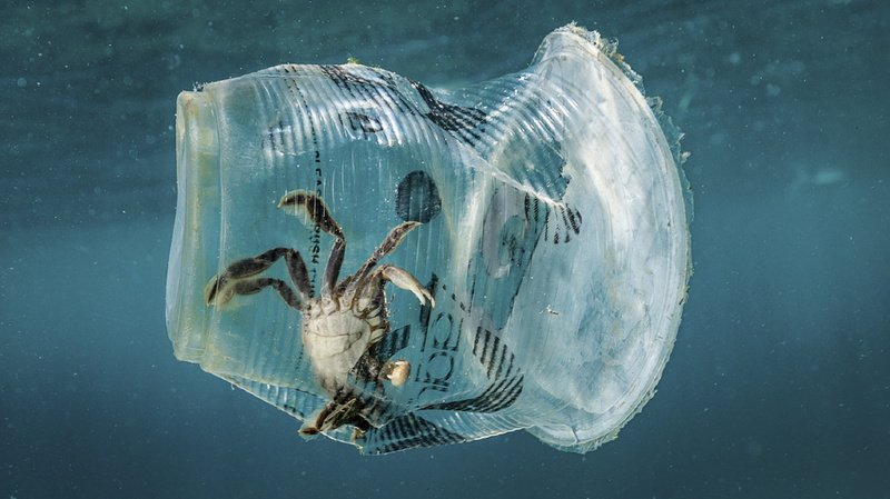 Environnement: la destruction de la nature représente une menace pour l'Homme