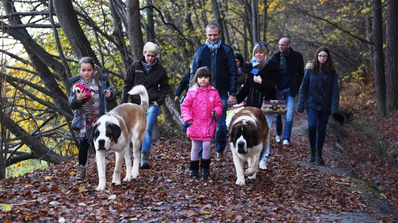 A Martigny, des balades avec les chiens du Saint-Bernard sont proposées tous les week-ends d'avril et de mai par la Fondation Barry.