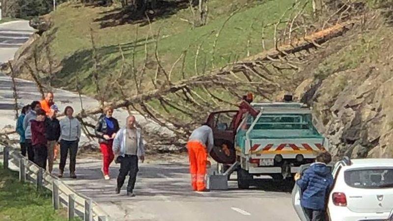 Un arbre a obstrué la route d'Anzère jeudi.