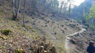 Sion/Mont-Noble: une coupe de bois dans les gorges de la Borgne qui choque