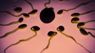 Etude au CHUV: des bactéries qui rendent le sperme heureux