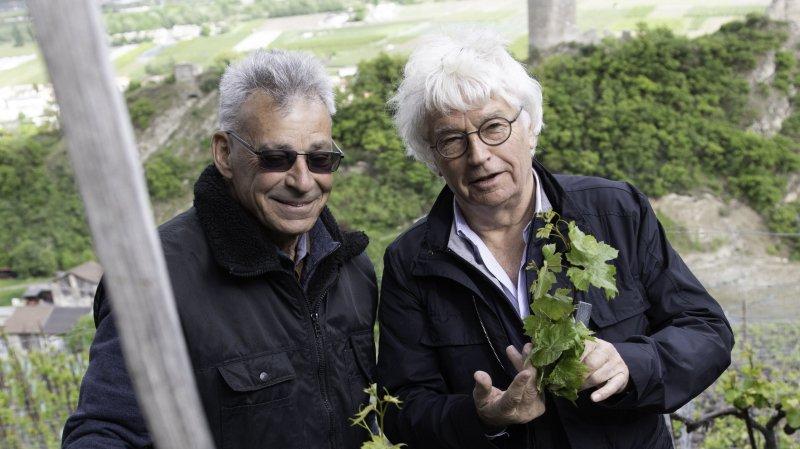 Le réalisateur Jean-Jacques Annaud ébourgeonne la vigne à Farinet