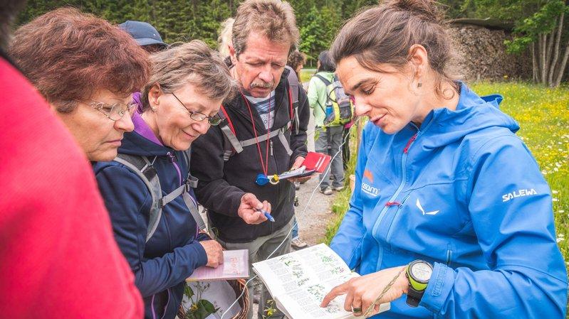 Plusieurs randonnées thématiques s'intéressent aux vertus des plantes sauvages ou à leur potentiel gastronomique.