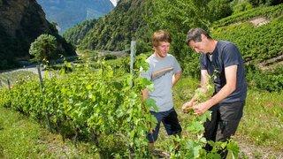 Valais: les vignerons protègent la Lienne