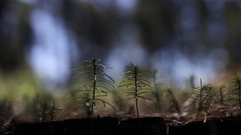 Climat: 900 millions d'hectares pourraient être boisés dans le monde