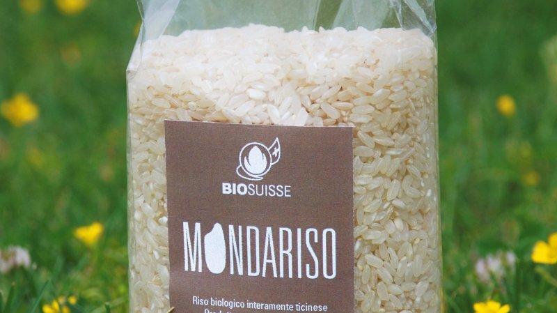 Le riz bio suisse pousse au Tessin