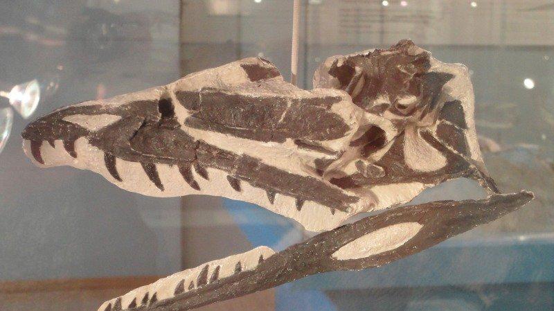 Dinosaures: une espèce inconnue découverte sur le site de Frick, dans le canton d'Argovie