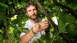 Un Valaisan transforme le cep de vigne en bijou de luxe, une première