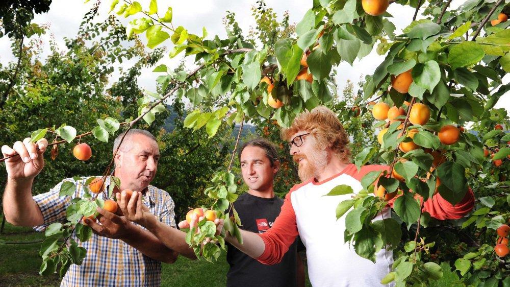 Stéphane Dessimoz (responsable production chez Biofruits), Yann Evéquoz (responsable technique pour l'office de l'arboriculture) et Danilo Christen (responsable du groupe production fruitière en région alpine à l'Agroscope) apprécient la qualité gustative de Lisa.
