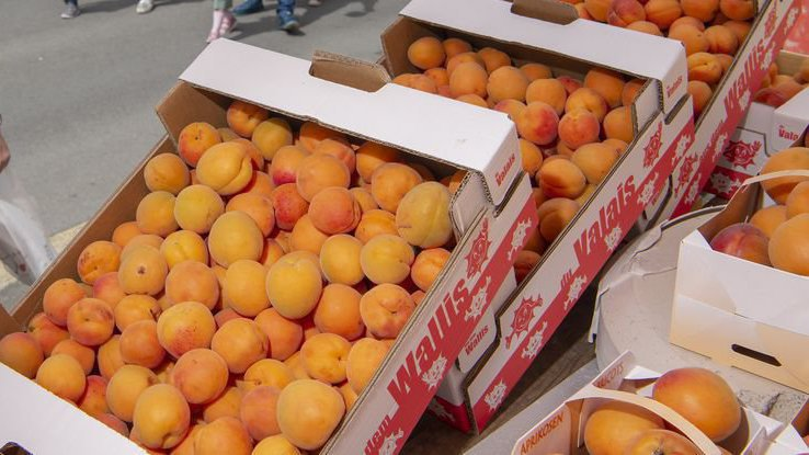 Plus de 4 tonnes d'abricots seront distribués vendredi lors de la journée officielle de notre canton à Vevey.