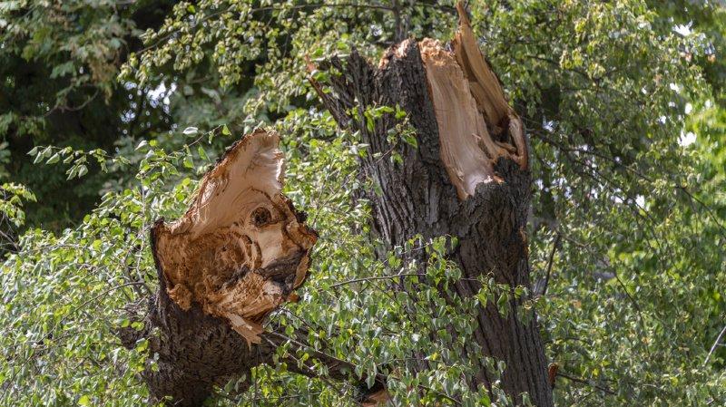 Tempête: les violents orages qui ont balayé la Suisse vendredi ont fait de nombreux dégâts