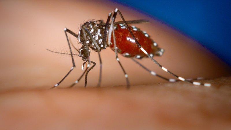 Le moustique tigre toujours présent à Monthey et détecté dans un nouveau quartier