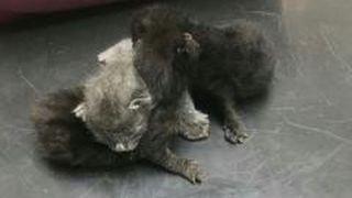 Chamoson: trois chatons jetés à la poubelle