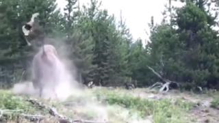Etats-Unis – Yellowstone: un bison projette violemment une fille de 9 ans dans les airs