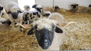 Valais: une nouvelle station d'essais agricoles voit le jour à Viège