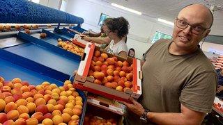 Quel est le juste prix de l'abricot valaisan?
