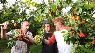 Valais: Lisa et Mia prêts à booster le marché bio de l'abricot