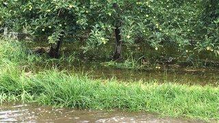 Inondation de Pramont: l'Etat du Valais perd une manche au Tribunal cantonal