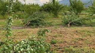 Valais agricole: des dégâts contrastés mais plutôt limités compte tenu de la violence des éléments