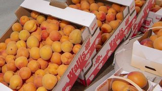 Fête des vignerons: quatre tonnes d'abricots valaisans seront distribuées à Vevey
