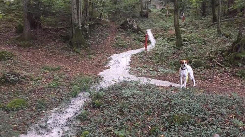 Fin août, une résurgence a été photographiée par un promeneur dans la forêt des Evouettes.