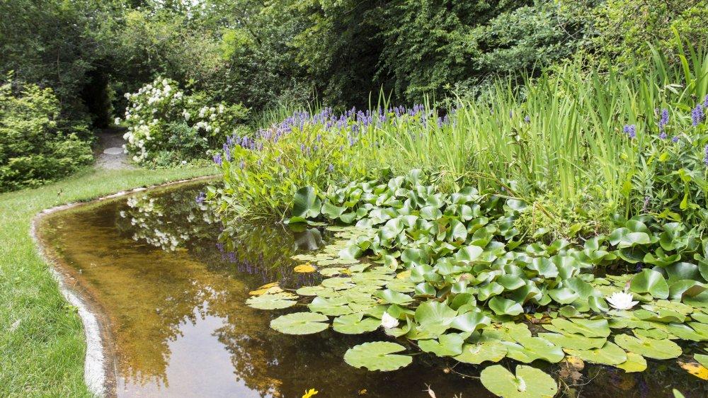 Le jardin botanique de Saint-Triphon est le paradis des fleurs et d'un petit peuple de lézards, tritons, grenouilles, libellules et tortues aquatiques.