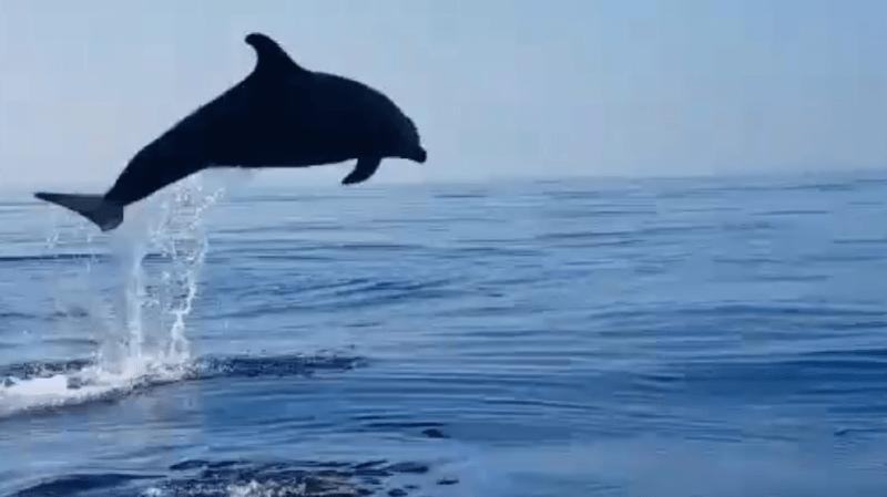 Italie: des pêcheurs sauvent un petit dauphin, sa maman les remercie à sa façon