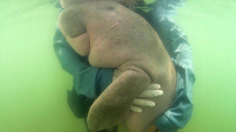Le petit mammifère marin était cajolé par ses soigneurs. Ils n'ont pu empêcher son décès.
