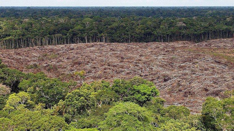 Amazonie: derrière les feux, l'appétit mondial pour le boeuf et le soja