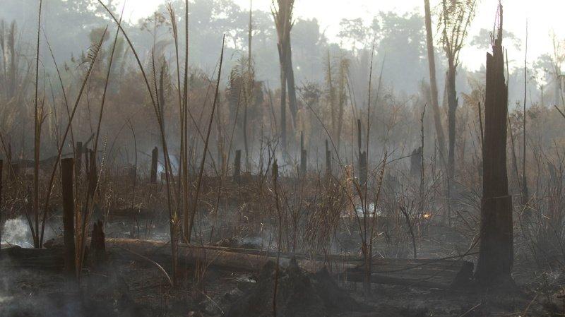 Amazonie: le Brésil rejette l'aide du G7 pour combattre les incendies
